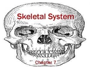 Skeletal System Chapter 7 Skeletal Organization 80 bones