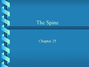 The Spine Chapter 25 Anatomy of the Spine