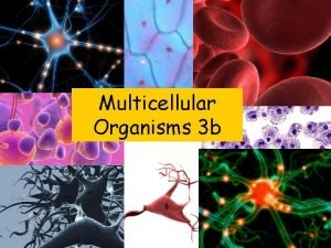 Multicellular Organisms 3 b Hormones are chemical messengers