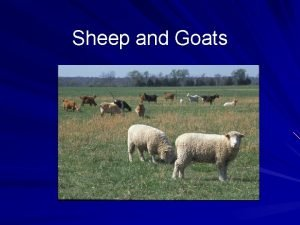 Sheep and Goats Sheep Goat Overview Both originated