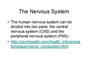 The Nervous System The human nervous system can
