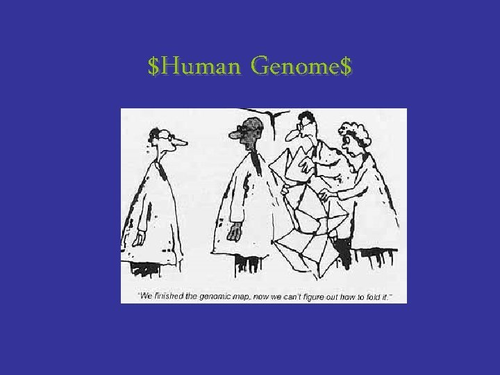 Human Genome Human Genome Project Goals It is