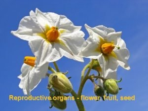 Reproductive organs flower fruit seed Flower reproductive structures