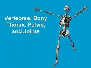 Vertebrae Bony Thorax Pelvis and Joints The Vertebral