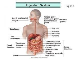 Digestive System Fig 23 1 Digestive System Organs