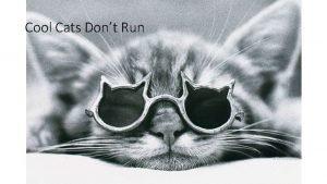Cool Cats Dont Run Cool Cats Dont Run