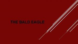 THE BALD EAGLE Common Name Bald Eagle Kingdom