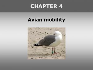 CHAPTER 4 Avian mobility Avian dispersal Definition of