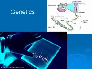 Genetics BACKGROUND Genetics is the branch of biology