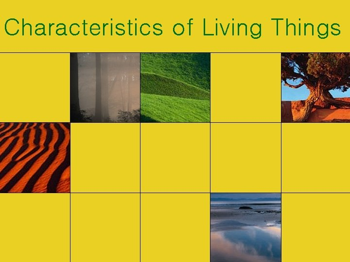 Characteristics of Living Things All living things share