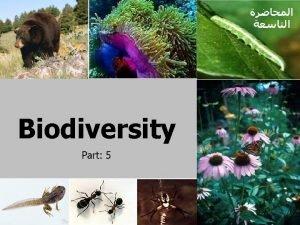Animals Biodiversity Animals Kingdom consist of NINE phyla