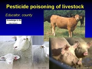 Pesticide poisoning of livestock Educator county Avoidable mortalities