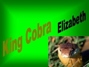 King Cobras are pale olive or yellow olive