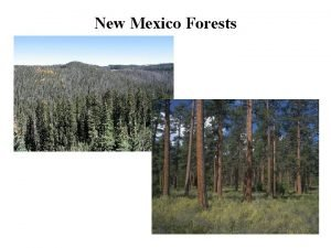 New Mexico Forests VEGETATION TYPES OF NEW MEXICO
