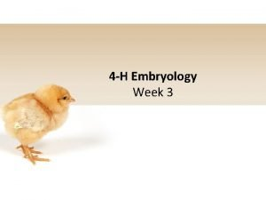 4 H Embryology Week 3 4 H Pledge