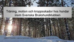 Trning motion och kroppsskador hos hundar inom Svenska