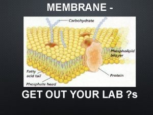 MEMBRANE GET OUT YOUR LAB s GET OUT