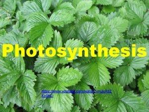 Photosynthesis https www youtube comwatch vuix A 8