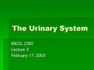 The Urinary System MEDL 2350 Lecture 3 February