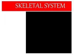 SKELETAL SYSTEM SKELETAL SYSTEM Study of Skeletal system