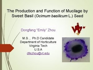 The Production and Function of Mucilage by Sweet