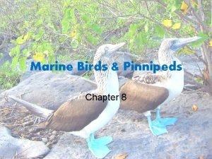 Marine Birds Pinnipeds Chapter 8 Marine Birds Great