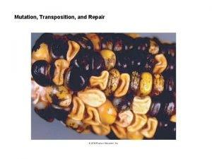 Mutation Transposition and Repair A Gene Mutation 1