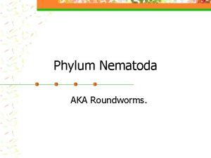 Phylum Nematoda AKA Roundworms Nematodes n Advancements over