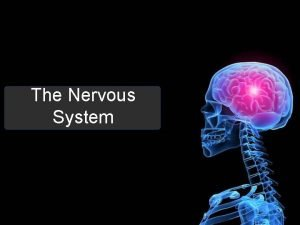 The Nervous System Structure Function Brain Spinal cord