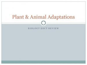 Plant Animal Adaptations BIOLOGY EOCT REVIEW Adaptations in