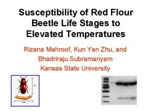 Susceptibility of Red Flour Beetle Life Stages to