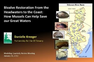 Bivalve Restoration From the Headwaters to the Coast