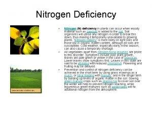 Nitrogen Deficiency Nitrogen N deficiency in plants can