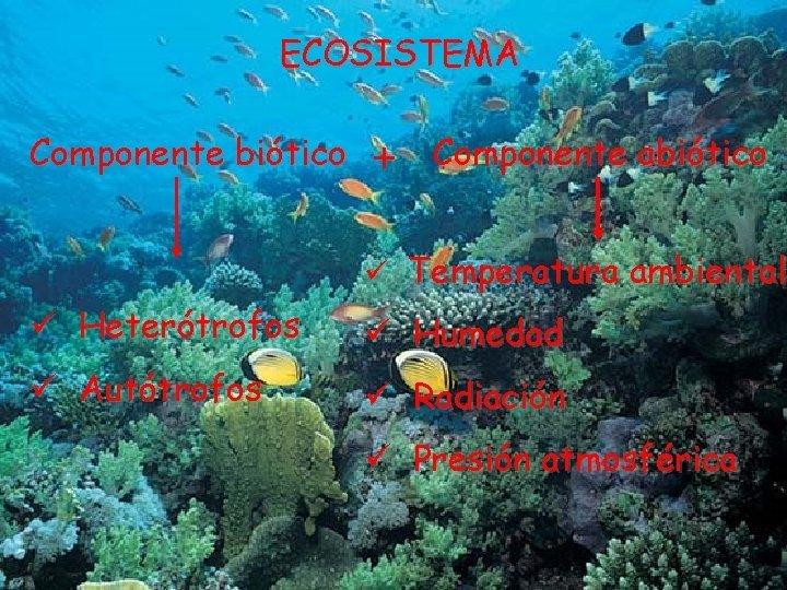 ECOSISTEMA Componente bitico Componente abitico Temperatura ambiental Hetertrofos