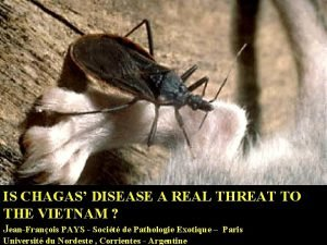 IS CHAGAS DISEASE A REAL THREAT TO THE