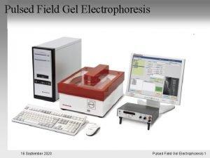 Pulsed Field Gel Electrophoresis 16 September 2020 Pulsed