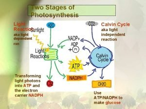 Two Stages of Photosynthesis Light Reaction aka light