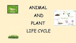 ANIMAL AND PLANT LIFE CYCLE Animal life cycle