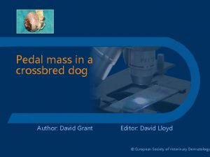 Pedal mass in a crossbred dog Author David