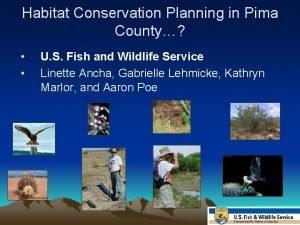 Habitat Conservation Planning in Pima County U S
