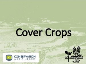 Cover Crops What Are Cover Crops A cover
