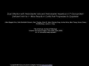 Dual Infection with Helicobacter bilis and Helicobacter hepaticus