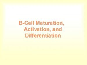 BCell Maturation Activation and Differentiation B Cell Receptor