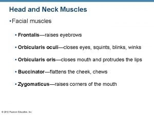 Head and Neck Muscles Facial muscles Frontalisraises eyebrows