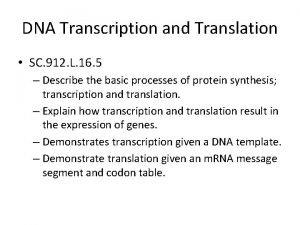 DNA Transcription and Translation SC 912 L 16