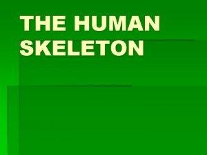 THE HUMAN SKELETON THE HUMAN SKELETON The Skeletal
