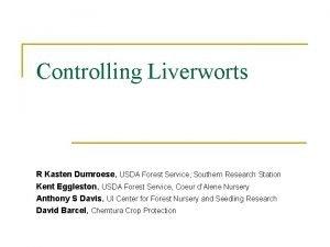 Controlling Liverworts R Kasten Dumroese USDA Forest Service