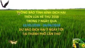 THNG BO TNH HNH DCH HI TRN LA