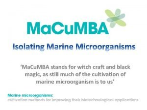 Ma Cu MBA stands for witch craft and