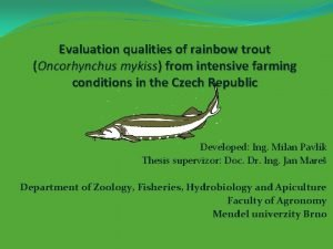 Evaluation qualities of rainbow trout Oncorhynchus mykiss from